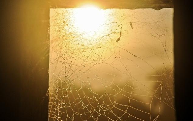 spider-webs-600495_640